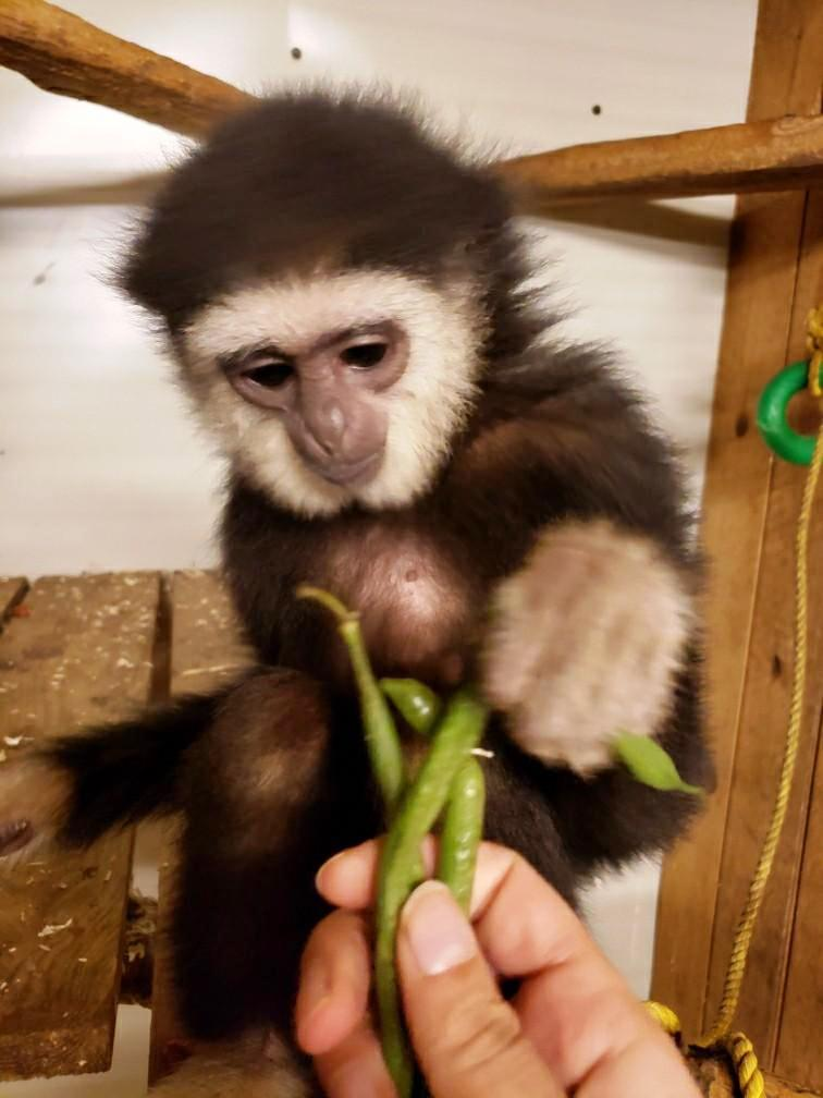 Gibbon returned to Elmvale Jungle Zoo five months after theft