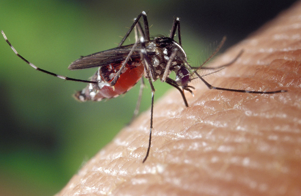Mosquitoes collected in Durham test positive for West Nile virus