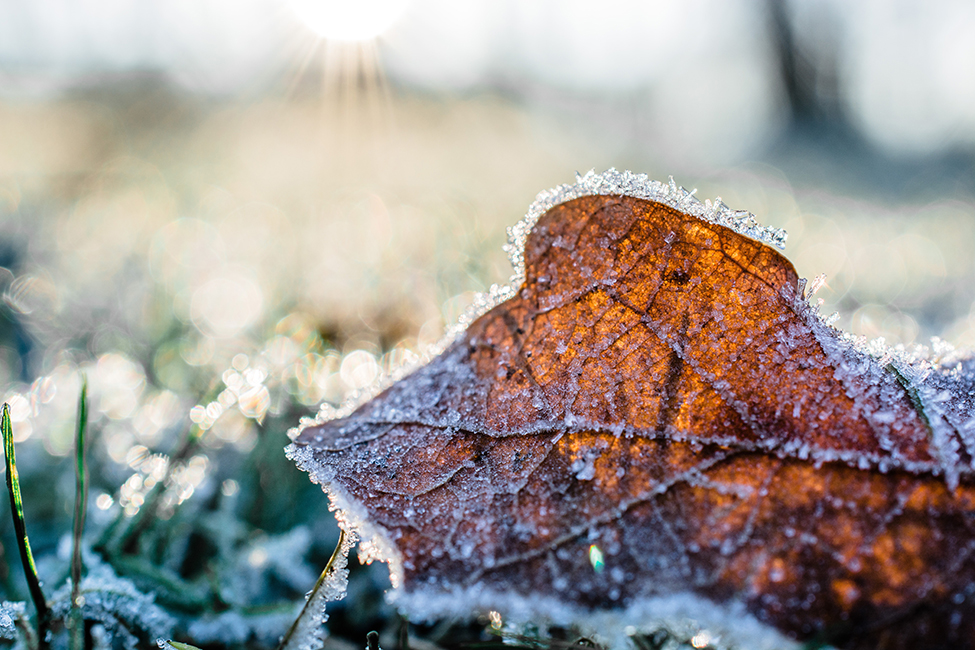 Frost advisory issued for much of southern Ontario
