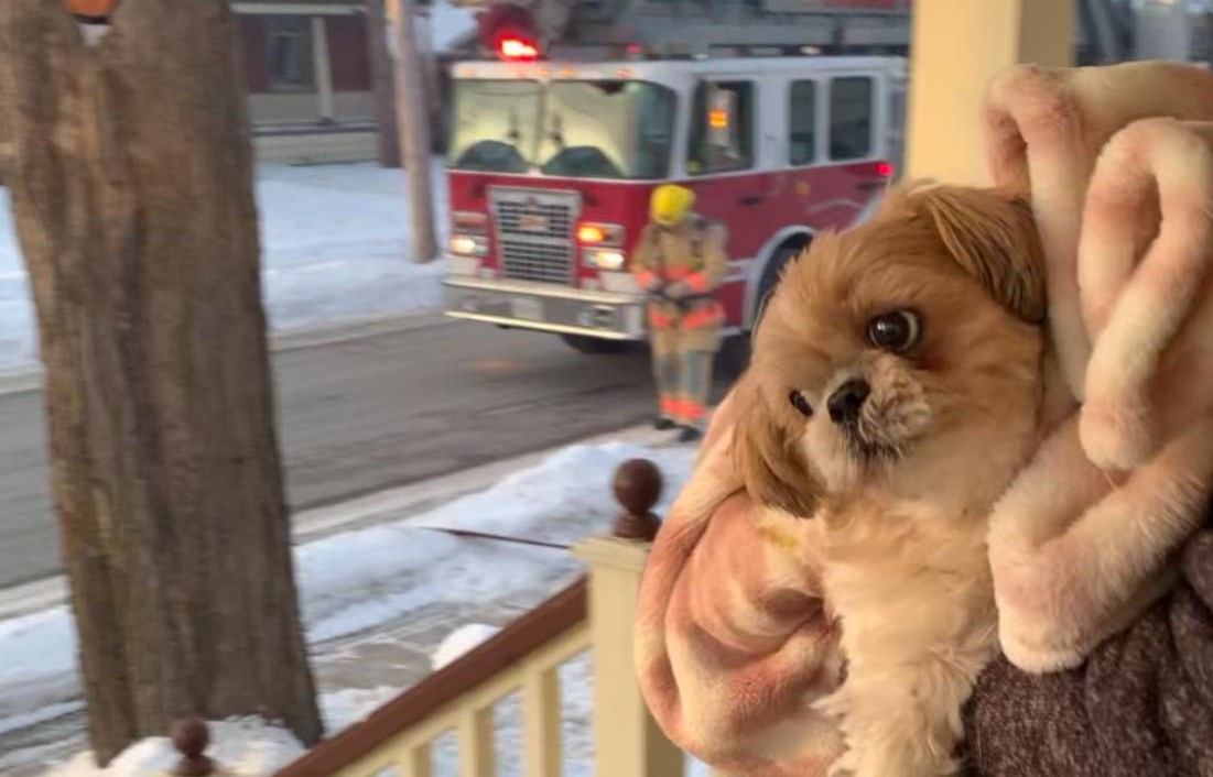 Man livestreams rescue of dog from house fire in Lindsay